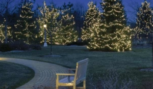 Christmas lights along a pathway